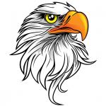 The Eagle Bike Show – Segunda edição – Curta o vídeo