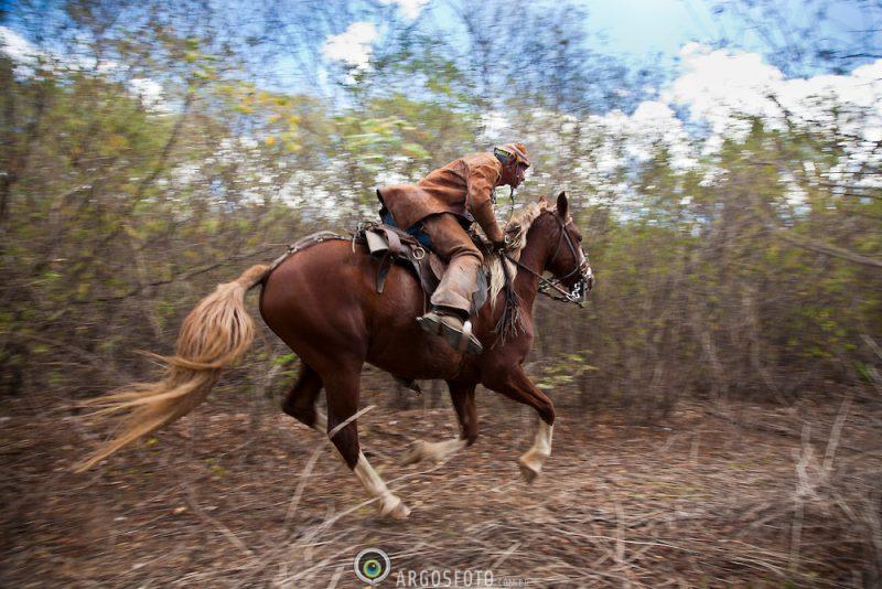 Vaqueiro na regiao do Agreste Pernambucano, usando o gibao de couro ,vestimenta tipica do vaqueiro nordestino utilizada para proteger-se quando encontra-se em corrida nas matas, caatinga, tentando dominar um animal. Foto Foto Adri Felden/Argosfoto