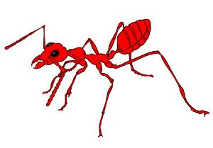 A picada das formigas vermelhinhas é muito dolorosa